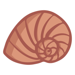 Hand drawn spiral shell