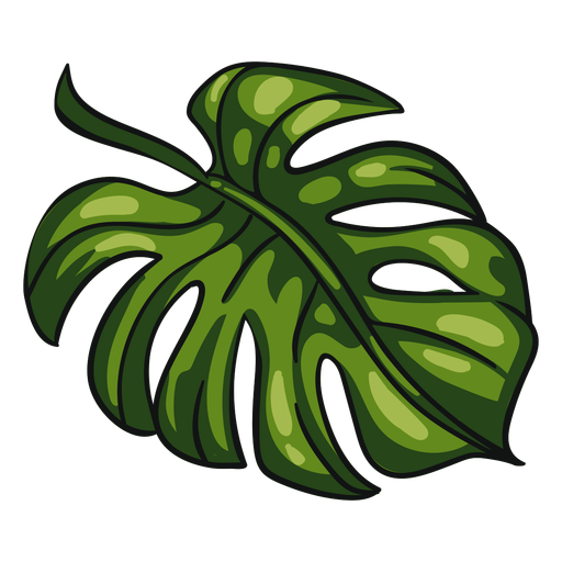 Hoja tropical verde Transparent PNG
