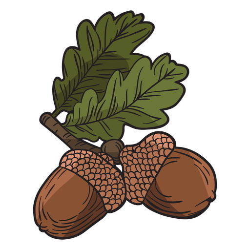 Hand drawn acorn Transparent PNG