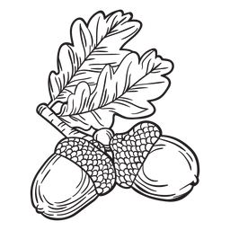 Handgezeichnete Eichel Gliederung