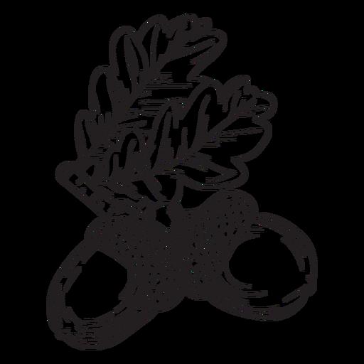Hand drawn acorn outline Transparent PNG
