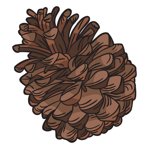 Hand drawn pine cone Transparent PNG