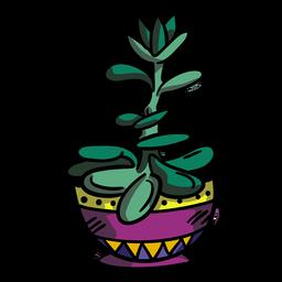 Maceta de plantas de jade suculenta