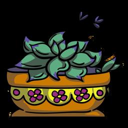Pot plant succulent