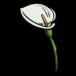 Lirio de cala de flores tropicales
