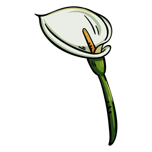Tropical flower calla lily Transparent PNG