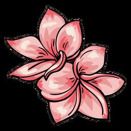 Plumeria de flores tropicais