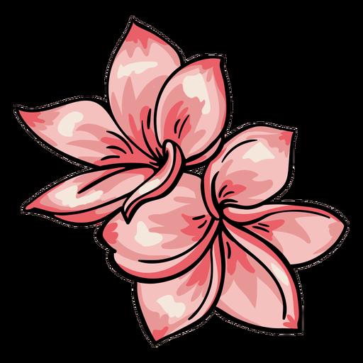 Plumeria de flores tropicales