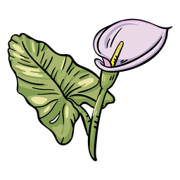 Flor tropical de copo-de-leite roxo