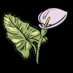 Lirio de cala púrpura flor tropical
