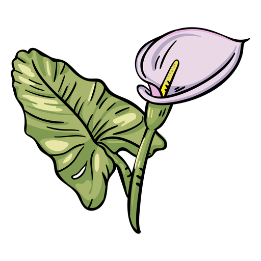 Tropical flower purple calla lily Transparent PNG