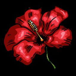 Hibisco vermelho tropical flor
