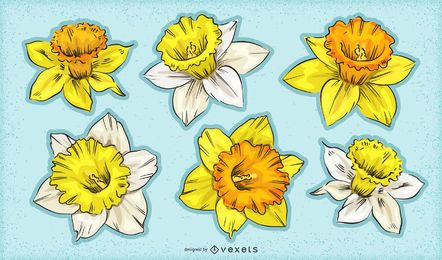 Daffodil flowers set