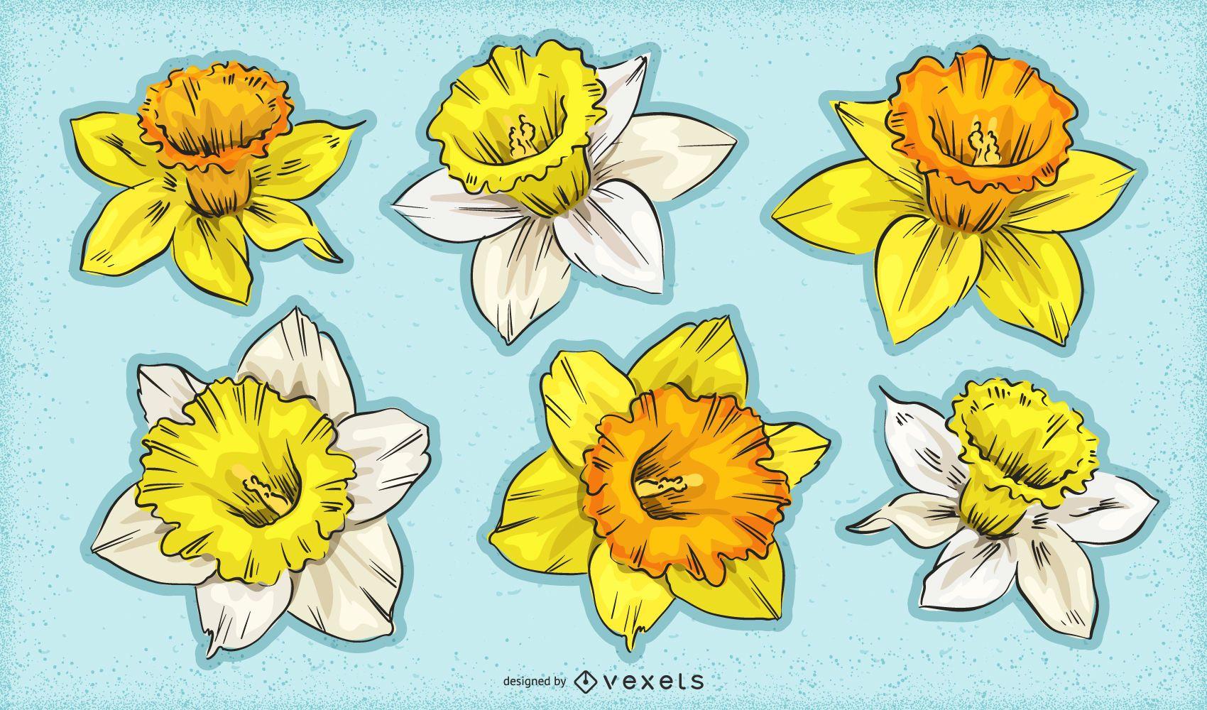 Daffodil flowers set