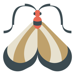 Colorful moth geometric flat