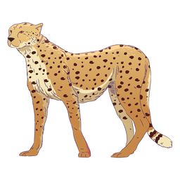 Wild animal cheetah hand drawn colorful