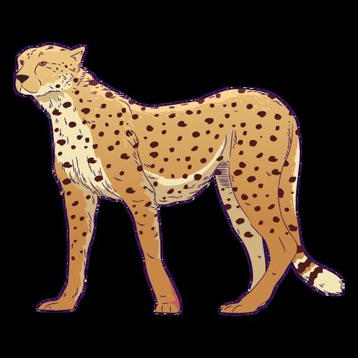 Wild animal cheetah hand drawn colorful Transparent PNG
