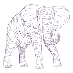 Wild animal elephant hand drawn