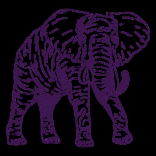Dibujado a mano elefante animal salvaje