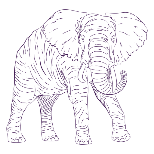 Wild animal elephant hand drawn Transparent PNG
