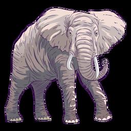 Elefante de animal selvagem desenhado à mão colorido