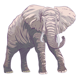 Mão de elefante animal selvagem desenhada colorida
