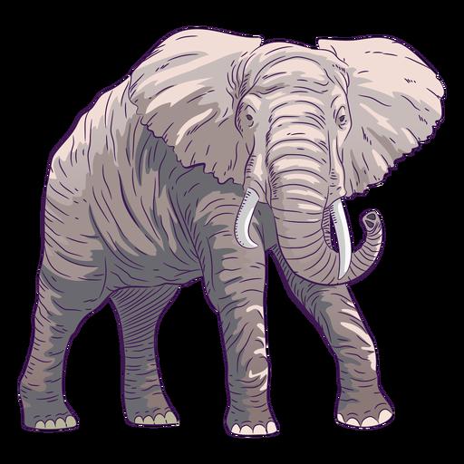 Dibujado a mano elefante animal salvaje colorido