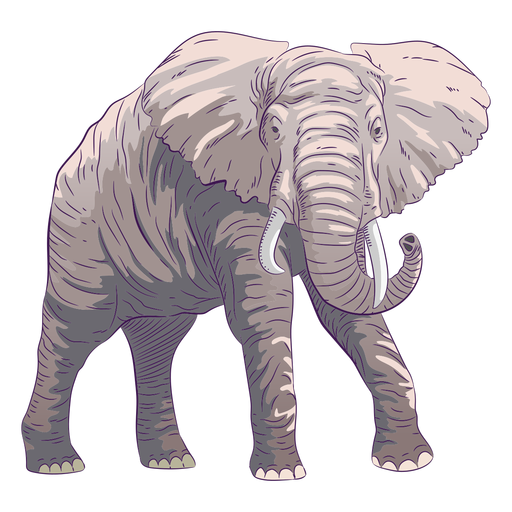 Wild animal elephant hand drawn colorful Transparent PNG