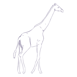 Wild animal giraffe hand drawn