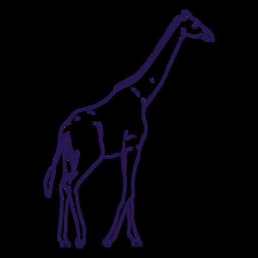Wild animal giraffe hand drawn Transparent PNG