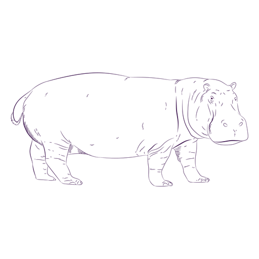 Wild animal hippo hand drawn Transparent PNG