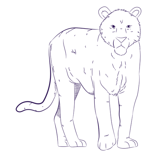 Animal selvagem tigre desenhado à mão Transparent PNG