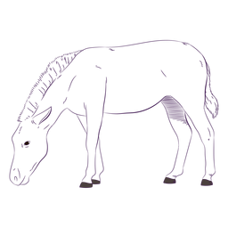 Dibujado a mano cebra animal salvaje