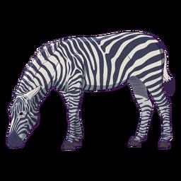 Animal selvagem zebra desenhado à mão colorido