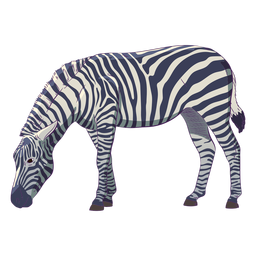 Wild animal zebra hand drawn colorful