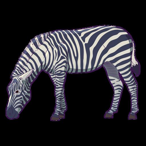 Dibujado a mano animal salvaje cebra colorido