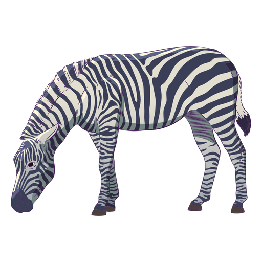 Wild animal zebra hand drawn colorful Transparent PNG