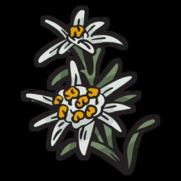 Edelweiss, flor nacional, suiza, ilustración