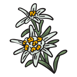Edelweiss national flower switzerland illustration