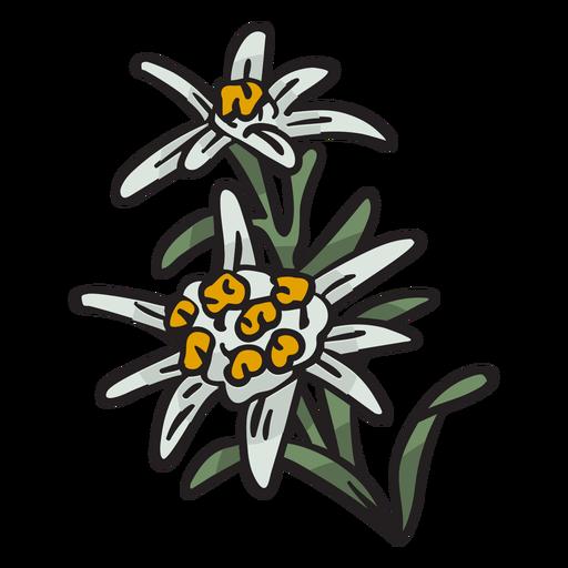 Ilustración de suiza de la flor nacional de Edelweiss Transparent PNG