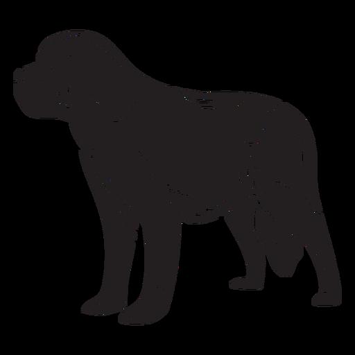 Switzerland animal dog breed black