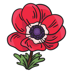 Anemone calanit flower illustration