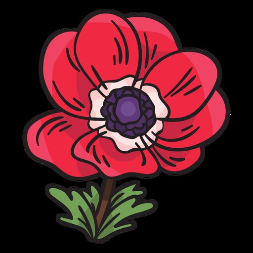 Anemone calanit flower illustration Transparent PNG