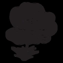 Calanit anémona flor planta negro