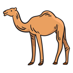 Camel animal illustration