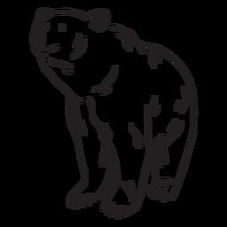 Traço de urso animal incolor