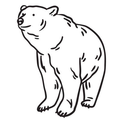 Colorless animal bear stroke Transparent PNG