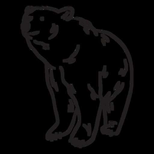 Trazo de oso animal incoloro Transparent PNG