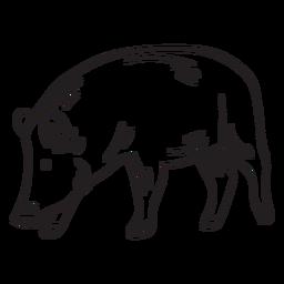 Säugetier Schnauze Tier Schwein Schlaganfall
