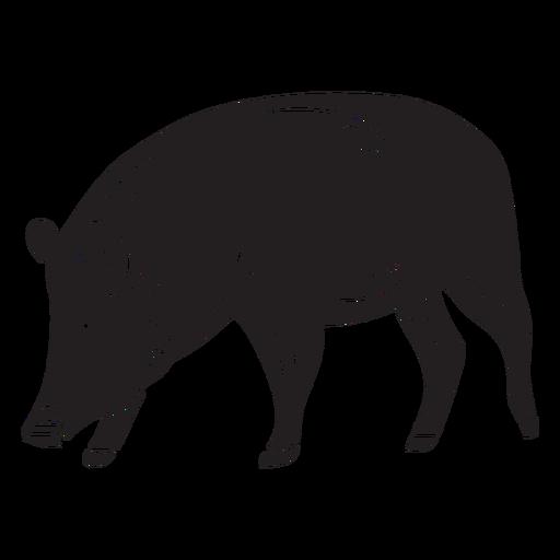 Native pig animal breed black